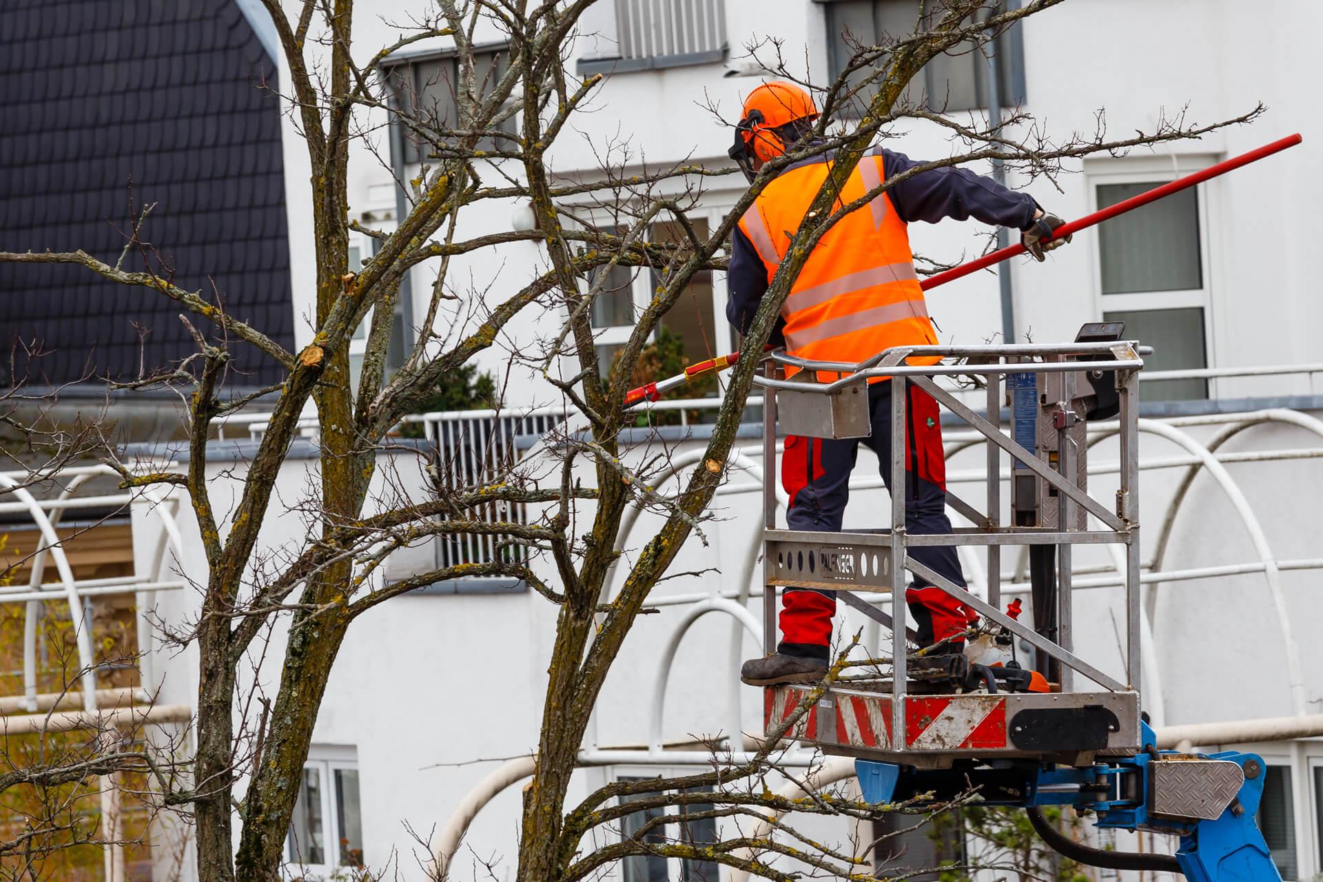 Baumschnitt Wuppertal